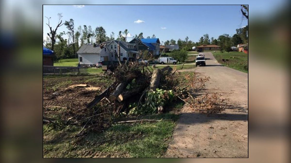 Greene County free tree and brush debris collection ends today