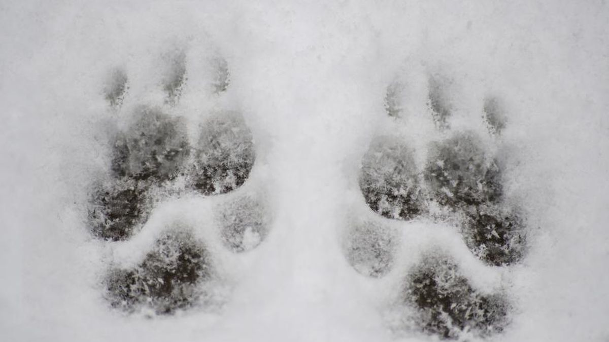 Humane society's 7 tips to keep pets safe in cold weather