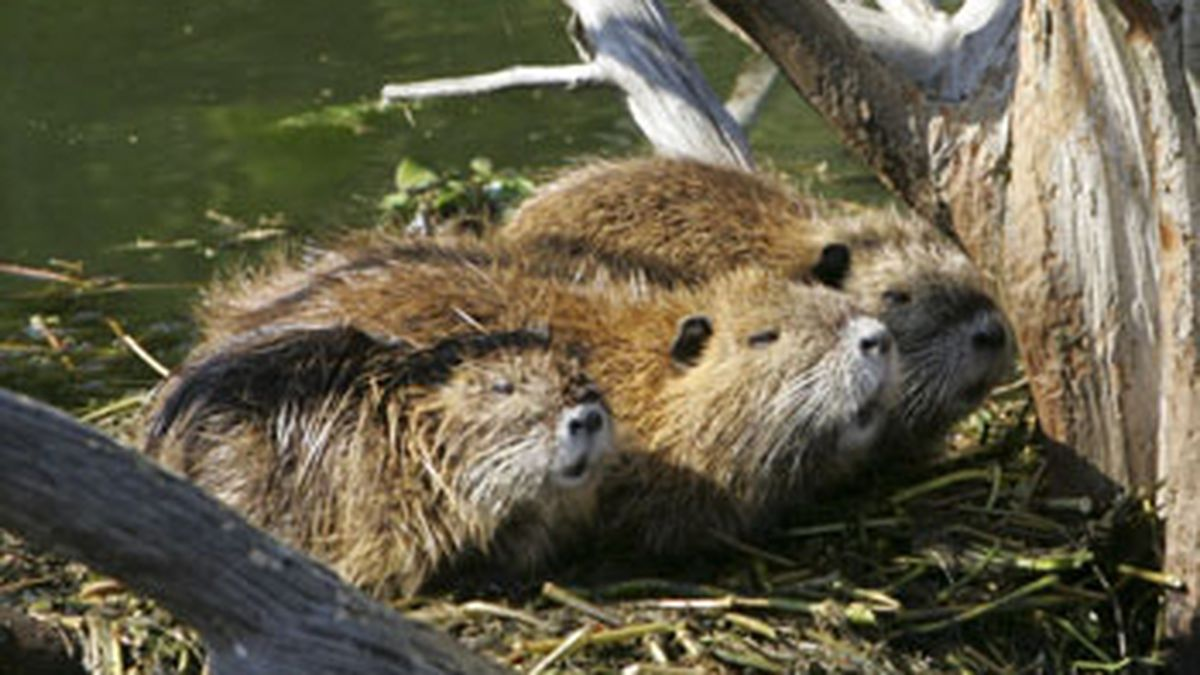 Texas wildlife officials warn residents not to feed swamp rats at park