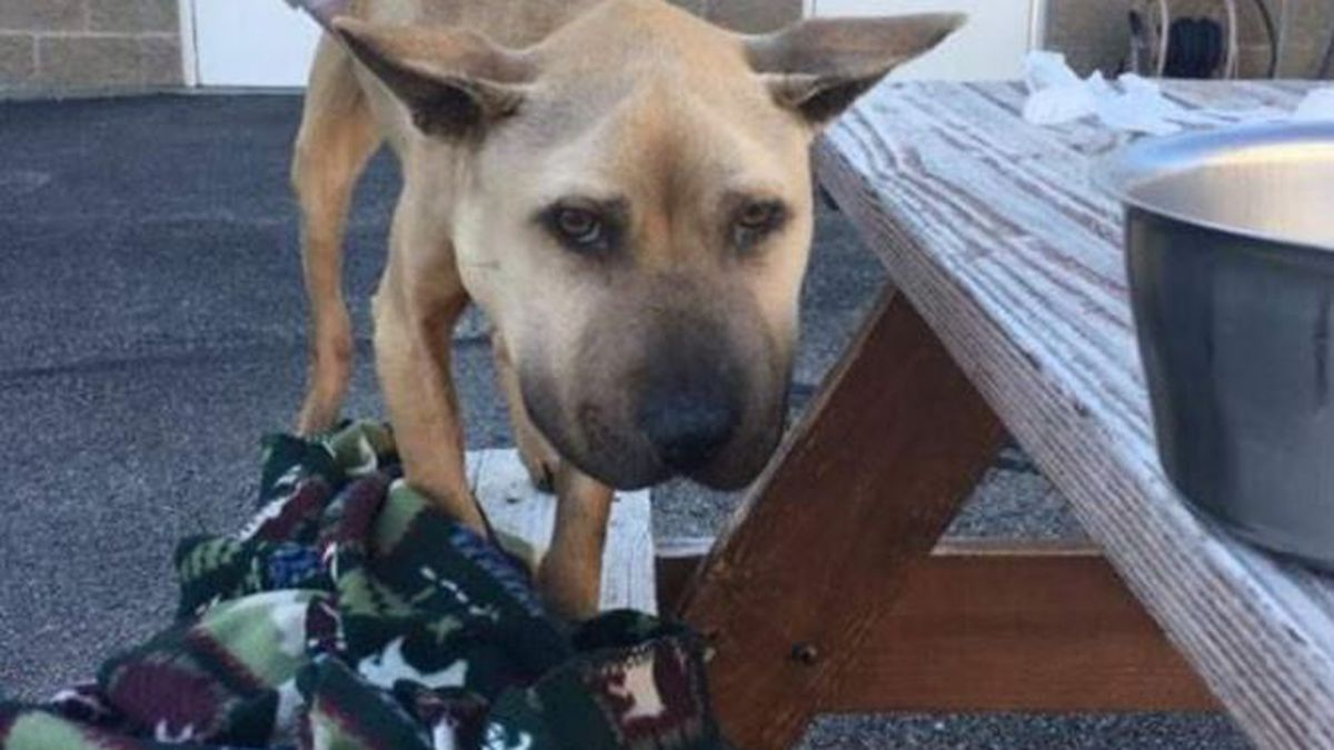 'Severely emaciated' dog found in Butler County has died; Deputies looking for owner