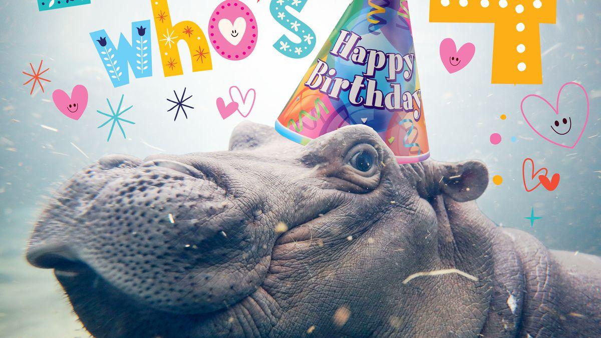 Cincinnati Zoo celebrates Fiona's fourth birthday with virtual event
