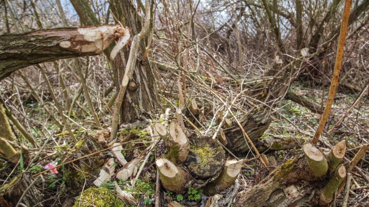 Iowa hunter dies after tree stand collapses