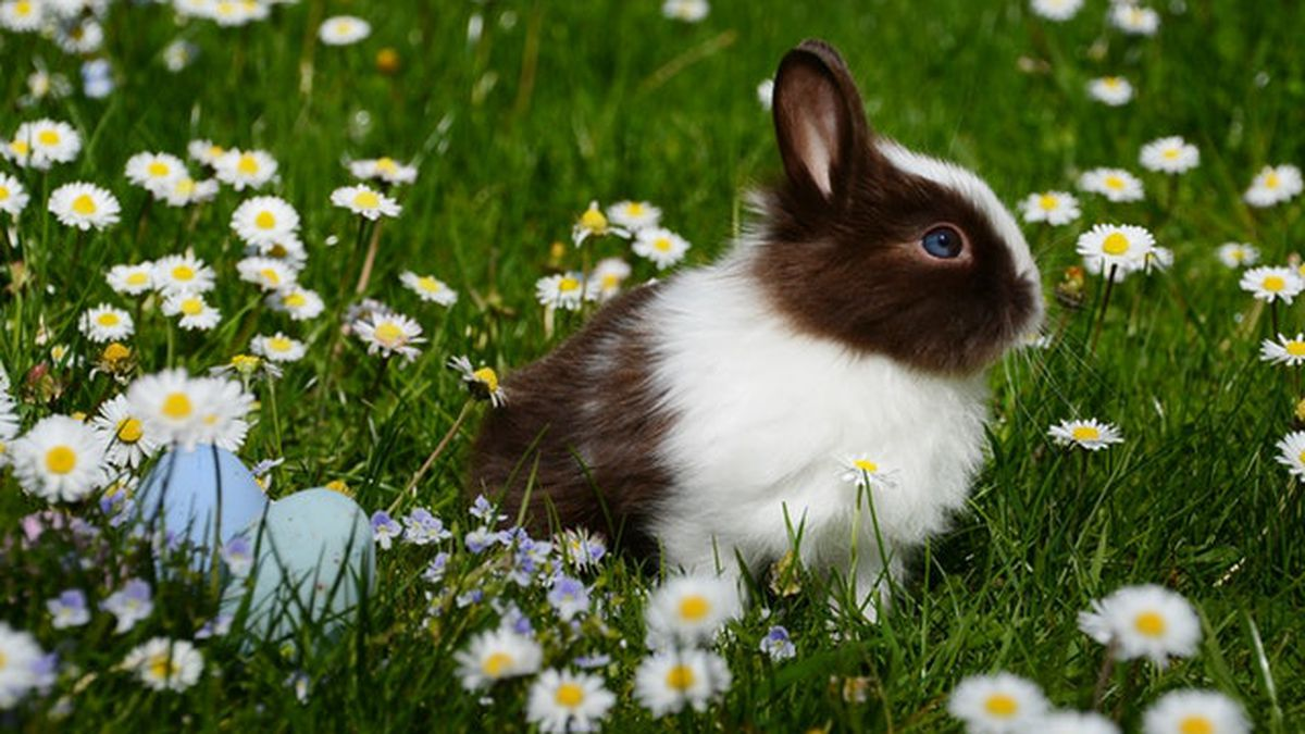 Be mindful if adopting a rabbit around Easter