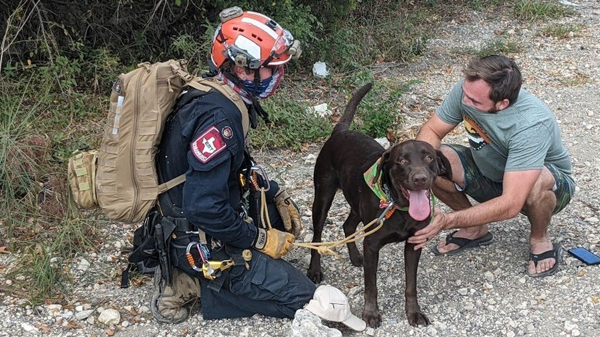 Dog survives fall from 70-foot cliff unscathed