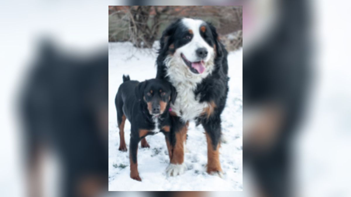 SICSA: Bring pets inside; if it's too cold for you, it's too cold for them