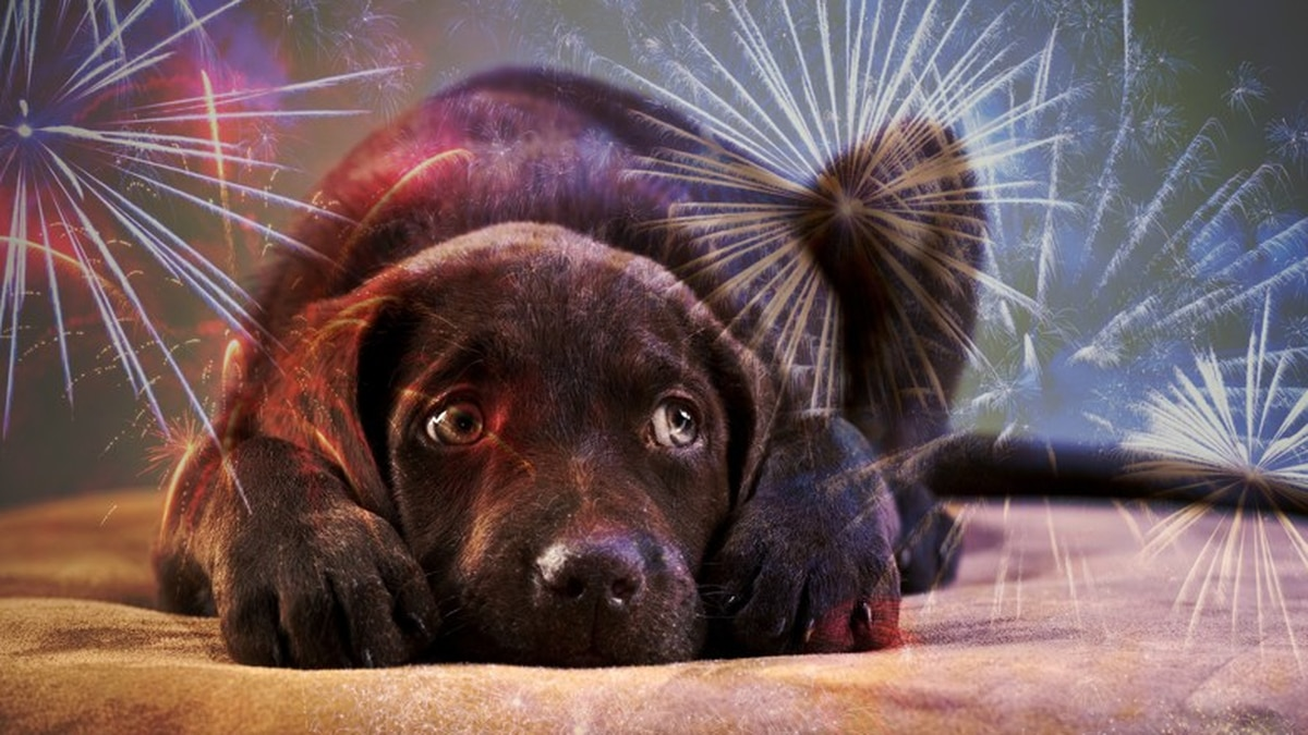 State Farm offers Fourth of July pet safety tips