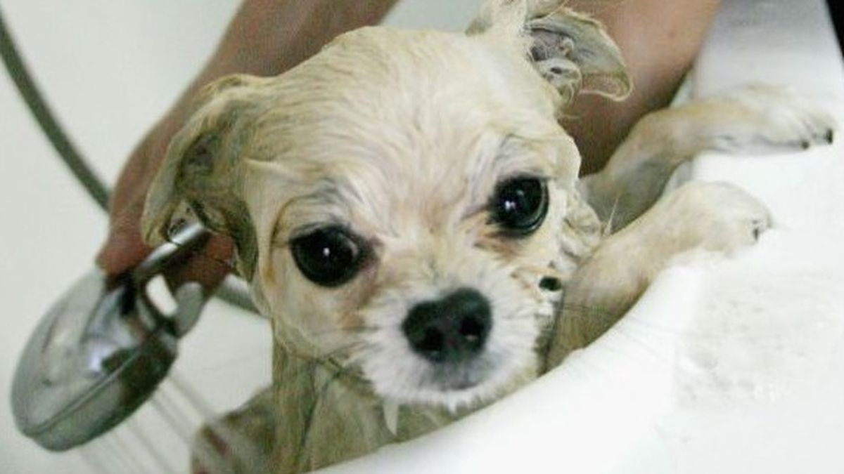 Pet Valu To Host Annual Come Clean For Cancer Dog Wash Fundraiser