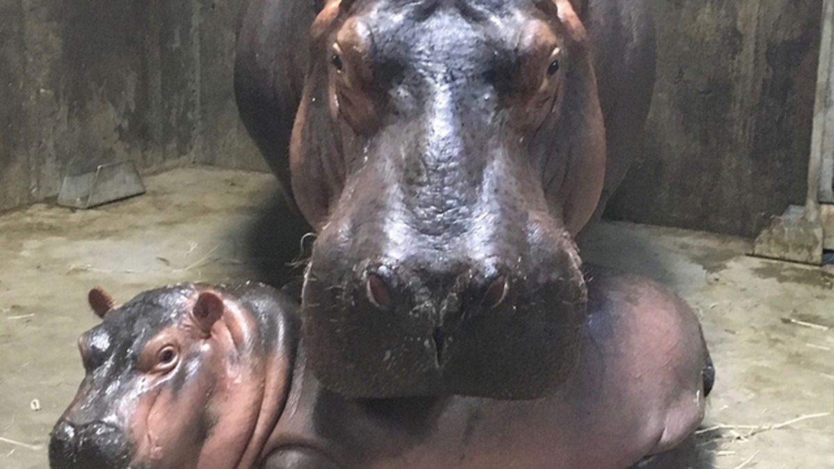 Fiona, zoo staff 'breaking up' after 6-month relationship